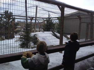 Making friends at the Yellowstone Wildlife Sanctuary