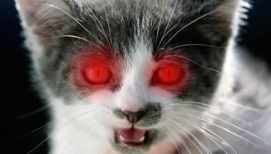 Les animaux dans les films d'horreur