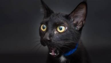 Les chats noirs de la télé et du cinéma!