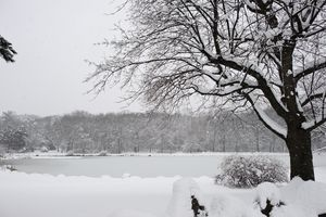 A fresh snowfall blankets Fulton park in Waterbury. Erin Covey Republican-American.