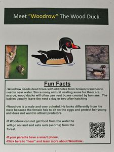This is one of the signs that will be featured on the children's interpretative trail project on the Kent Land Trust property on Skiff Mountain. Each station will have a QR code that can be scanned with a smartphone for the link to the Cornell University Lab of Ornithology and the bird call can be heard. They were created by Marvelwood School Junior Bryn Bachman. Lynn Mellis Worthington Republican-American