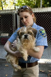 Southbury assistant animal control officer Martha Stephens cares for a Shitzhu mix that was one of the 31 dogs seized at the home of Nancy Boeckel and her mother Norma at 1232 Georges Hill Road in Southbury and is now being cared for at the Southbury Animal Control location. Bob Falcetti Republican-American