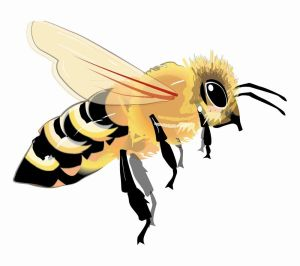 Bees excel at using the 'wisdom of the crowd,' something investors could take a lesson from, according to Prof. Robert Sapolsky of Stanford School of Medicine. TNS