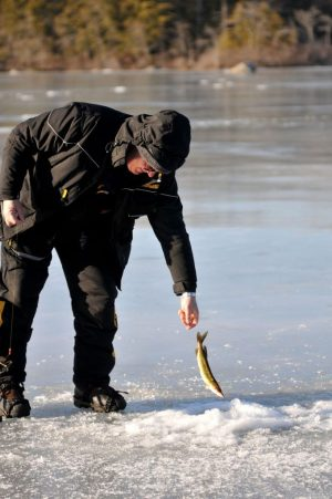 Phil Kozlak of Torrington releases a pickerel he caught Friday while ice fishing on Burr Pond in Torrington. Alec Johnson/ Republican-American