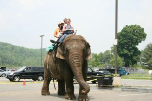 Winsted residents get an elephant ride in 2007 courtesy of Beulah, an Asian elephant owned by R.W. Commerford & Sons, a traveling circus based in Goshen. Republican-American archive