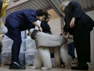 In this image taken on Thursday, Jan. 11, 2018, chief designer Silvia Radaelli, left, and fashion designer Giovanna Temellini try a coat on Ulisse, an Afghan greyhound, a creation by Ms. Temellini at the Temellini manufactory headquarters, in Milan, Italy. Milan has long been known for its pret-a-porter. Now the pooches want in with a new line of haute couture for canines: Temellini Dog a Porter. (AP Photo/Luca Bruno)