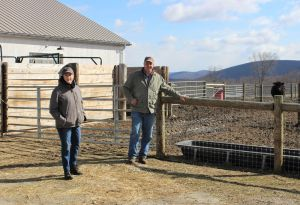 Margery Feldberg, co-owner of De Hoek Farm, and Frank Tencza, farm manager, show the rear side of the barn and an area of pasture where cows feed at the New Milford farm. Alicia Sakal/ Republican-American