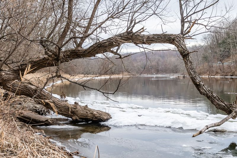 NAUGATUCK, CT. 16 February 2020-021620BS71 - A buccolic scene looking upstream along the banks of the Housatonic River on Sunday. Bill Shettle Republican-American