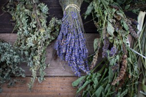 Three bunches of herbs, mint, lavender and licorice displayed upside down on a wooden table. Photo by Cinthya Santos-Briones for Brewing Memories workshop, October 24, 2020.