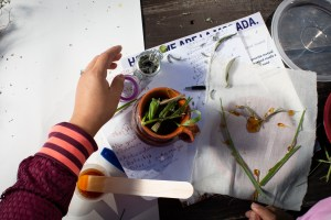 Drawing a memory with honey and dry herbs. Brewing Memories, October 3, 2020. Photo by Cinthya Santos-Briones.