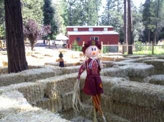 Apple Ridge Farms (4)