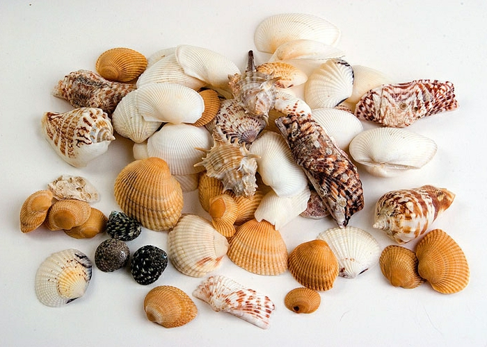 summer crafts for adults, many white and brown, orange and black seashells, in different shapes and sizes, on white background
