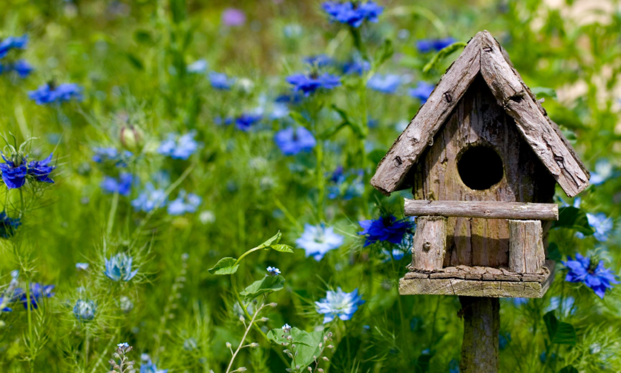 green field with many blue flowers, small wooden bird house, with round door