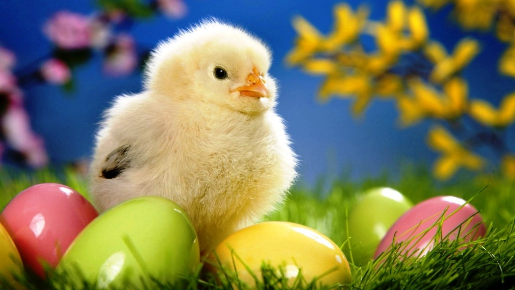 fluffy yellow chick, near glossy easter eggs in pink, green and yellow, easter egg ideas, green grass and blossoming plants