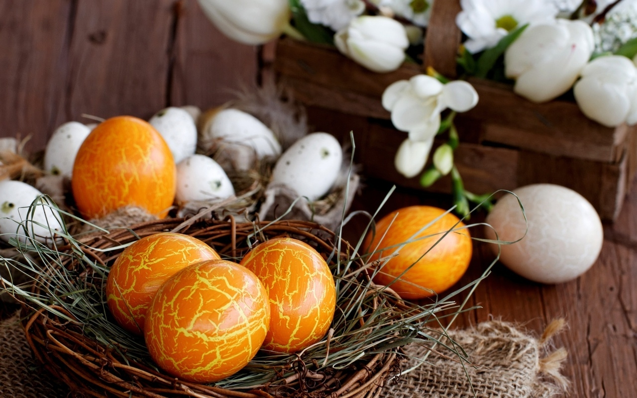 little nest made of twigs and straw, containing orange dyed eggs, with a yellow cracked effect, easter egg coloring, plain eggs and white tulips in background