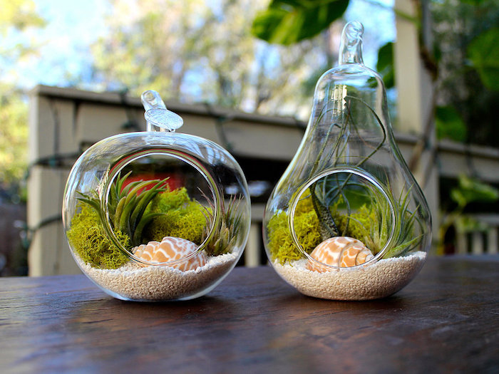 pear- and apple-shaped glass terrariums, filled with white rice, pale green moss, tillandsia care, air plants and seashells