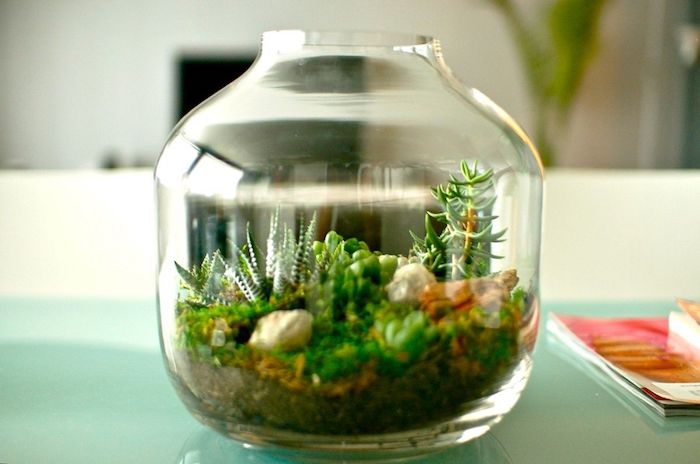mini plant terrarium, inside a bottle-shaped glass container, with dirt and pebbles, succulents and various air plants