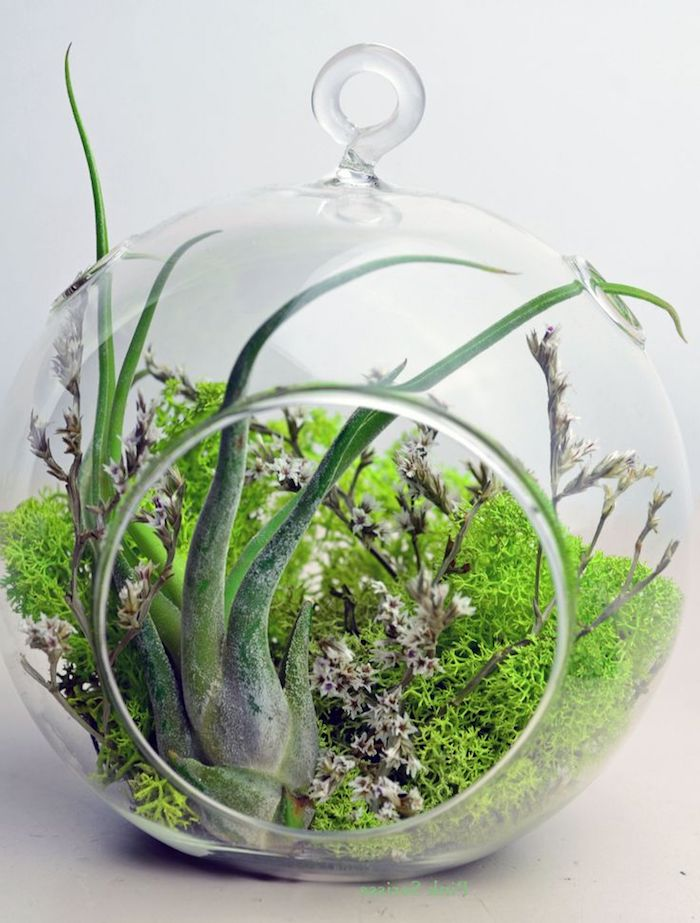 pinkish-white tiny blossoms, and bright light green moss, inside a round glass terrarium, with a single air plant, tillandsia care