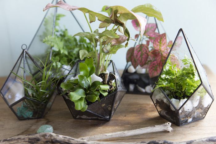 five diamond-shaped planters, or glass terrariums, with black details, holding air ferns and other plants, with dirt and stones