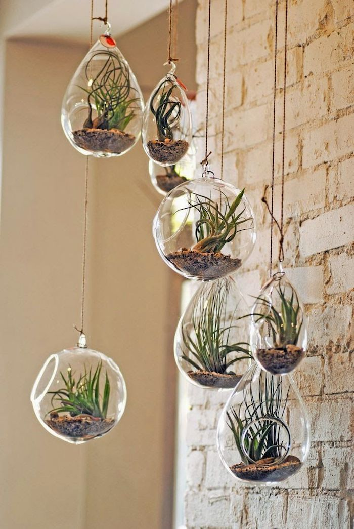 eight round and tear-shaped glass containers, filled with brown pebbles, and green air plants, hanging terrarium idea