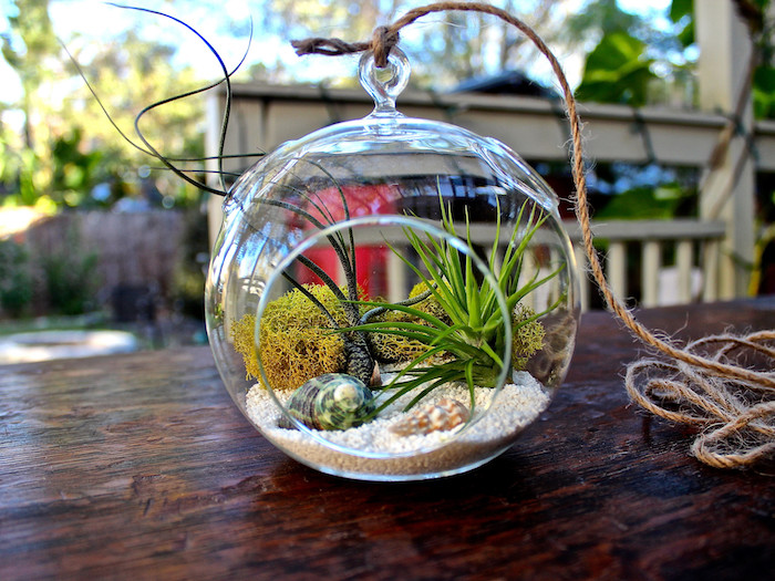 yellowish-green dry moss, seashells and fine, light beige sand, inside air plant terrarium, made of clear glass, and tied with a rope