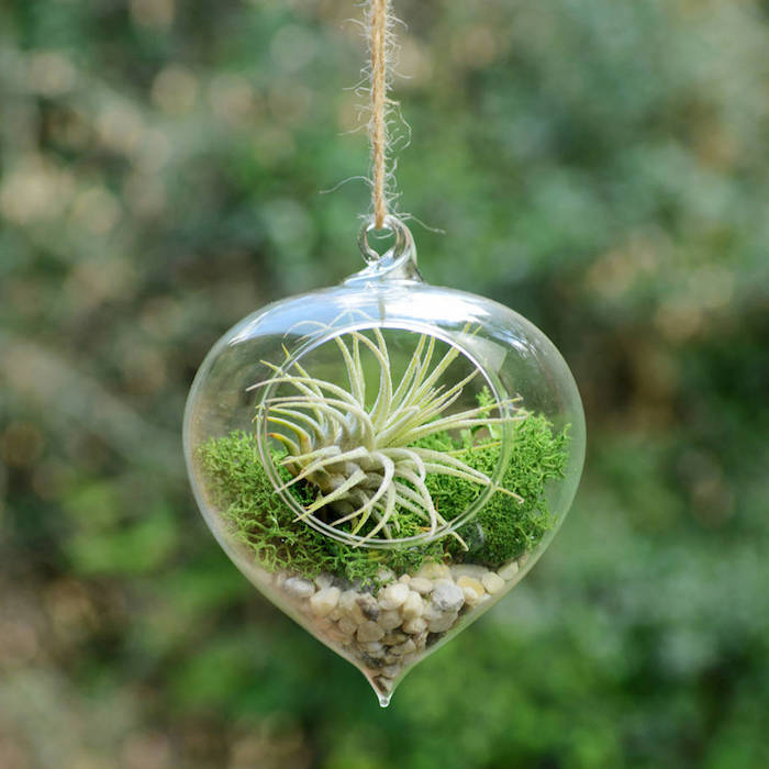 pebbles and moss, with light green tillandsia, hanging air plants, pointy glass container, hung in the open, on beige thread