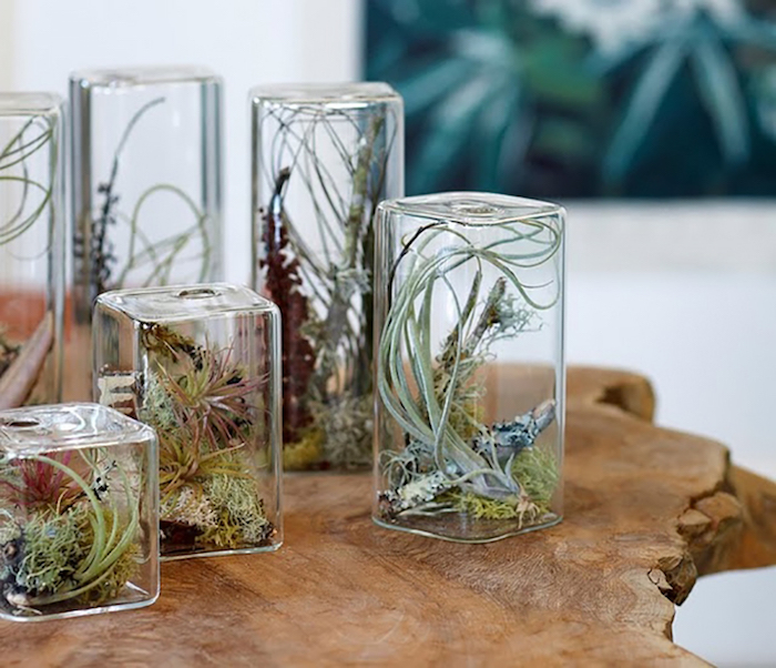 rectangular glass terrariums, with oval edges, filled with airplants in different shades of green, and decorated with moss, and small sticks