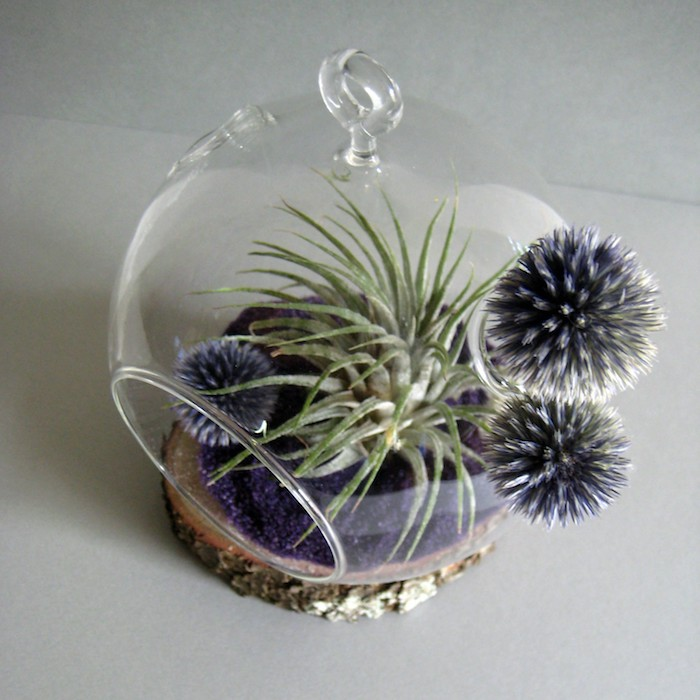 grayish-blue and fluffy, dark sphere-shaped plants, inside and on a glass sphere, with purple sand, and a light green tillandsia