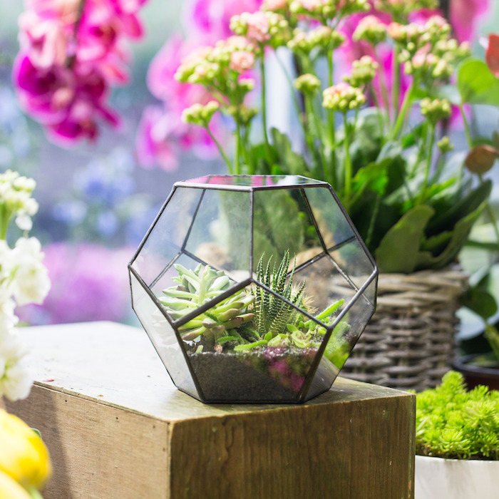 glass air plant terrarium, with black detailing, containing succulents and dirt, placed on wooden block, near different flowers