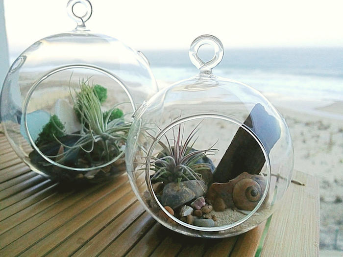 beach-themed tillandisa terrariums, decorated with sand, pebbles and seashells, placed on a wooden table, near the sea