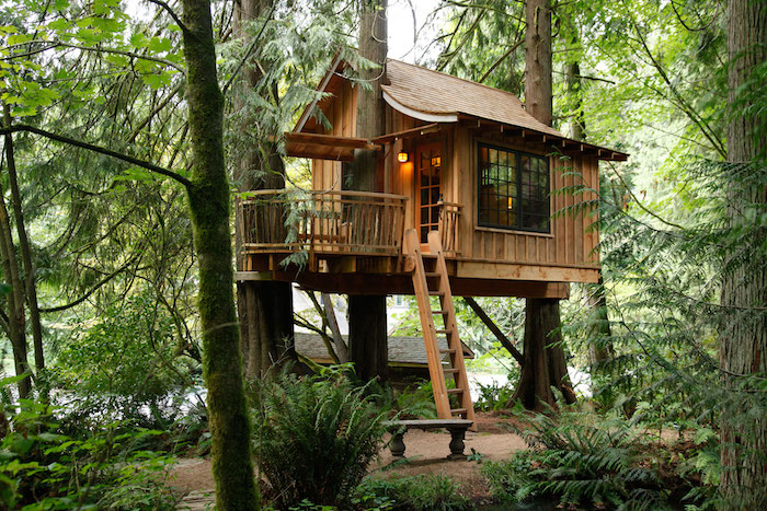 ferns and other plants, surrounding a large, diy treehouse, built around several tall trees, in a mossy forest, ladder and stone bench