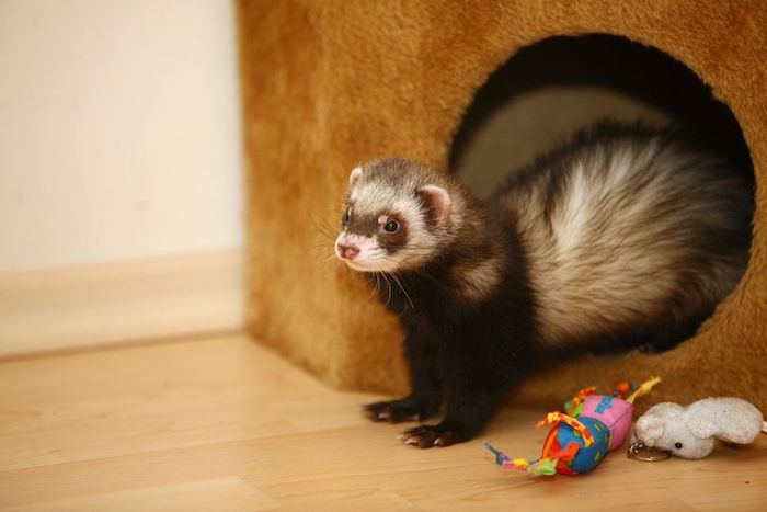 plush toys in different colors, near a little house, with round entrance, exotic pets list, ferret coming out of the house