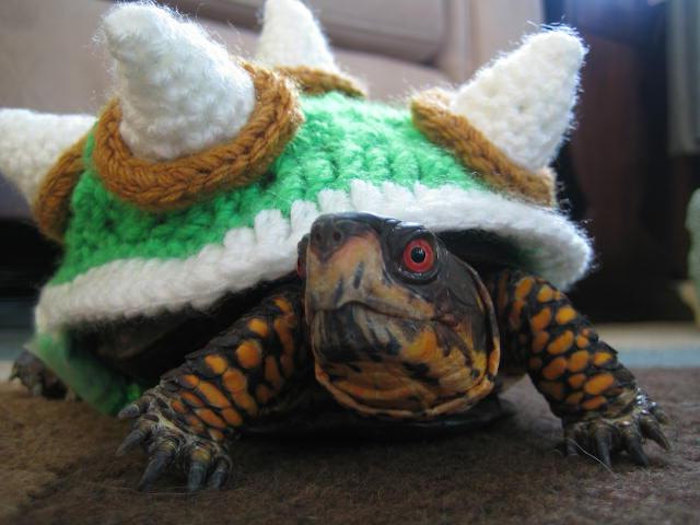 super mario inspired tortoise costume, knitted shell cover in green, white and yellow, made to look like bowser's armor, worn by tortoise with red eyes