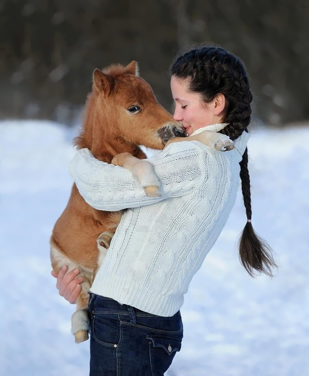 teenage girl in white sweater, with long dark brunette braid, hugging and kissing a tiny, miniature horse foal, with brown coat