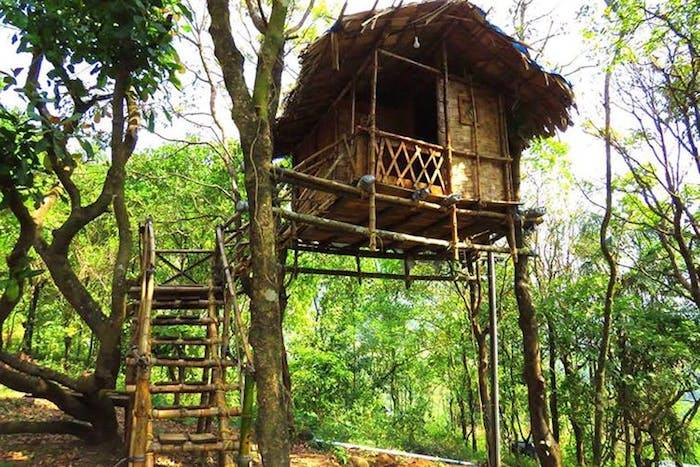 straw roof covering a bamboo hut, built on several trees, backyard treehouse, accessible through a wooden staircase
