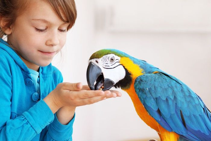 girl in a blue jacket, offering food to a large macaw, best exotic pets, parrot with blue, yellow green and white feathers
