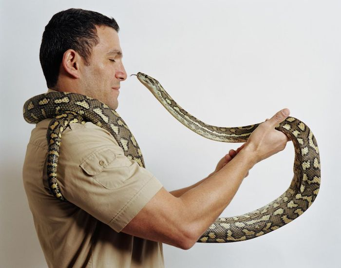 brunette man wearing a khaki shirt, holding a large snake, with green and yellow scales, exotic animals as pets, coiled around his neck, and trying to lick his nose