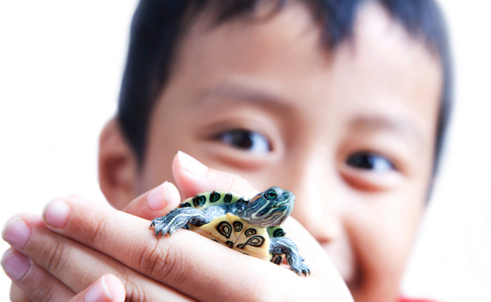 asian child smiling, while holding a small red eared turtle, in his little hands, low maintenance pets, bright white background