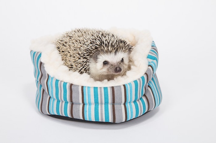 bed for hedgehogs, made from striped, teal and white, gray and brown fabric, low maintenance pets for apartments, fluffy white bedding, and small hedgehog inside