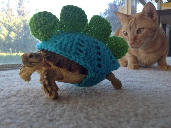 low maintenance pets, tortoise wearing a green and blue, cable knit shell cover, made to look like a dinosaur's hide, orange tabby cat nearby