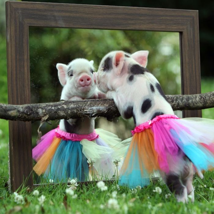 ballerina piggy wearing a multicolored tutu, leaning on a branch, in front of a large mirror, pet ideas, short white and black fur, funny photo