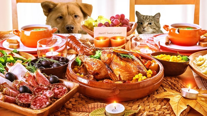 salami and olives, a roasted turkey, and two bouls of soup, on a table with several small candles, thanksgiving card messages, cat and dog looking at the food