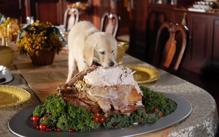 puppy eating a lrge turkey, placed on an oval grey dish, containing green veggies, and cherry tomatoes, thanksgiving greetings, plates and a small bouquet in the background