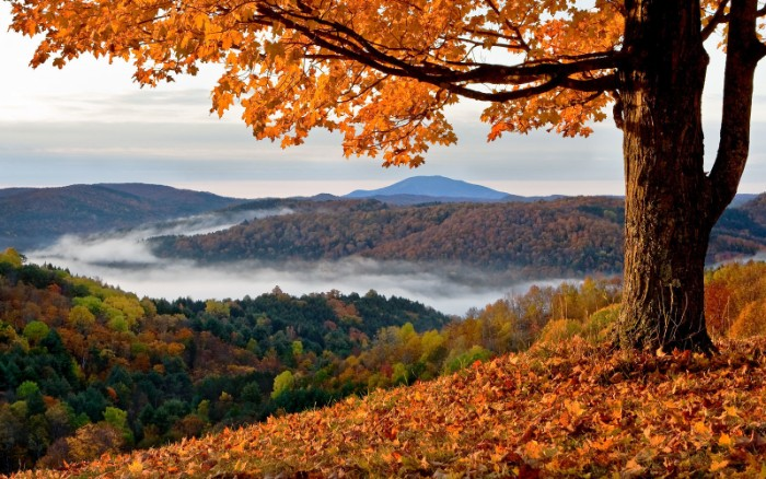 a single tree, with orange fall leaves, on a hill, overlooking a mountainous region, thanksgiving wishes, forests with multioclored trees, surrounded by white mist, in the distance