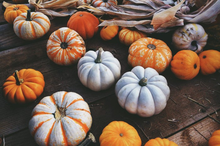 dozens of small pumpkins, white and orange, and featuring stripes, on a dark wooden surface, with dried maize leaves nearby