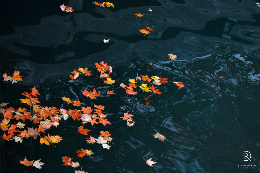multiple leaves in yellow and orange, floating on top of a dark pool of water, with small waves, thanksgiving text messages