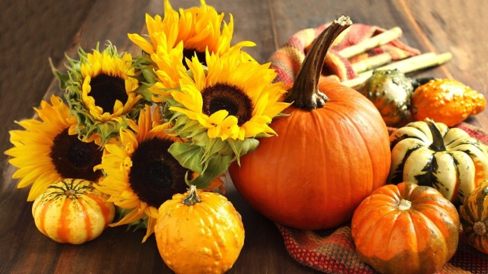 five sunflowers and several pumpkins, in different colors and sizes, placed on a wooden surface, thanksgiving message to employees, a multicolored striped scarf nearby