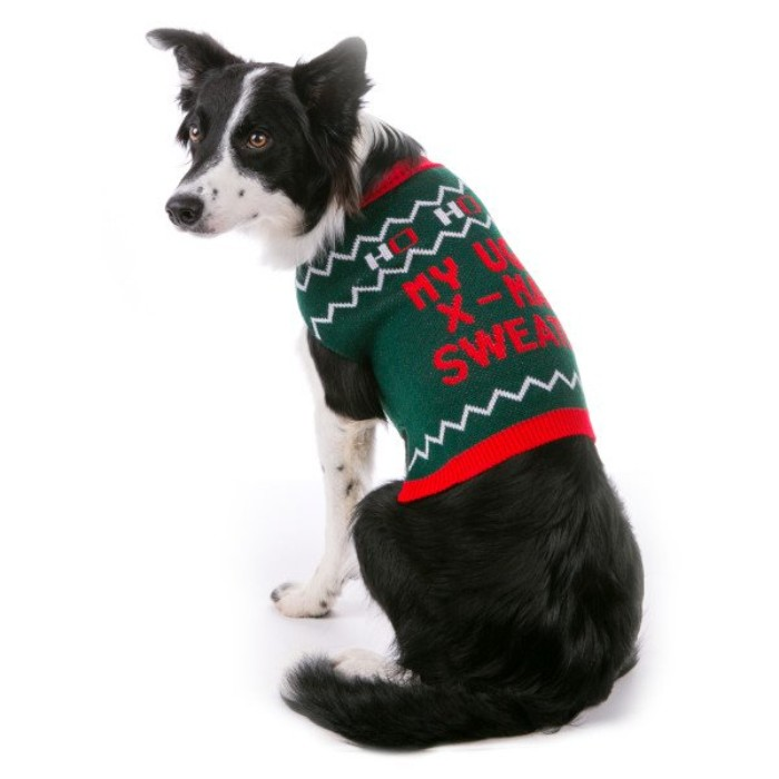 collie with black and white fur, dressed in a green jumper, with a red festive message, and white details, cute christmas sweaters, for border collies