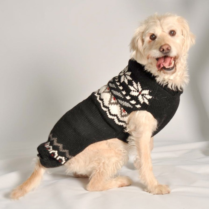 cream colored dog, looking at the camera, with its tongue hanging out, dressed in a dark grey, fair isle jumper, cute christmas sweaters for pooches