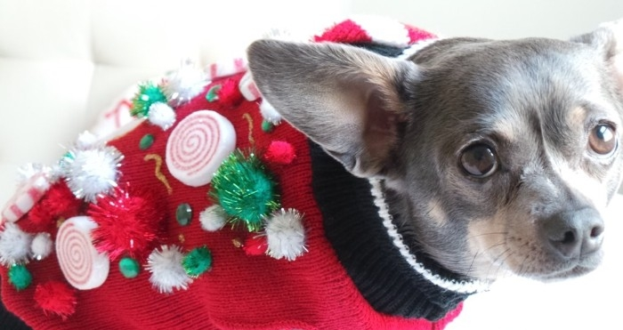cute christmas sweaters, red jumper decorated with green and white pom poms, beads and gem stickers, and faux peppermint candy, on a small grey dog